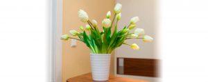 Blumen der Praxis Breuell Eimsbüttel